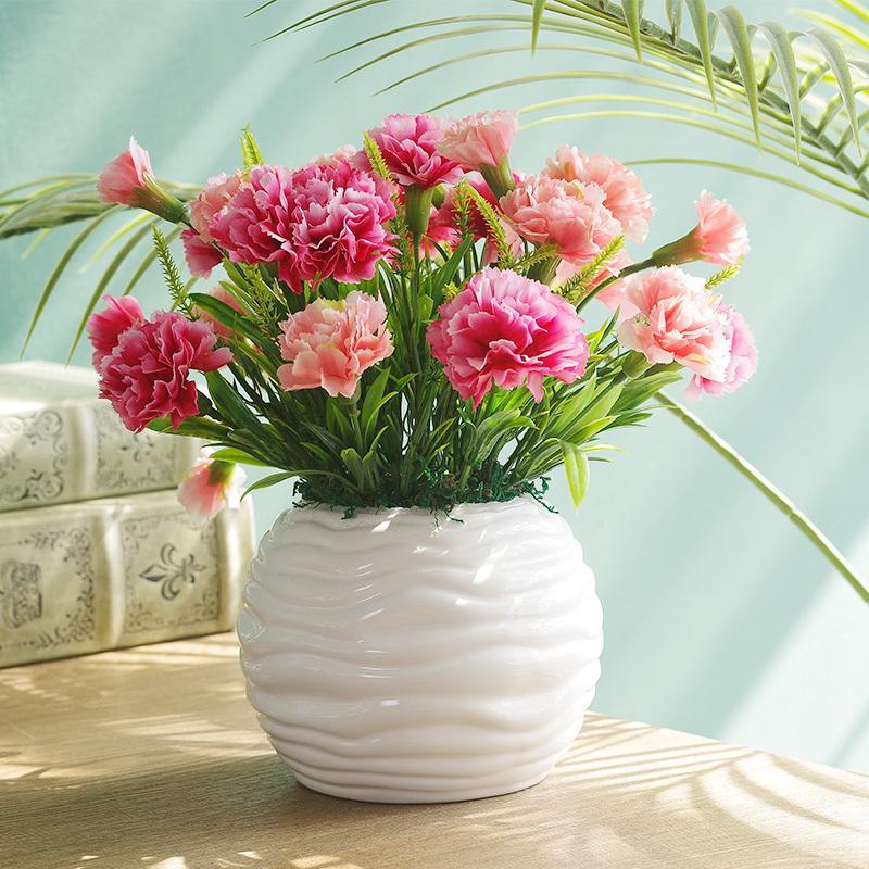 康乃馨这样养,不仅长势好,还能开花,花期半年