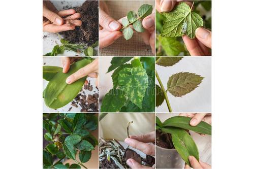 如何识别室内植物的病虫害并获得有效的解决方案