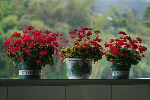 阳台如何养海棠花?需要注意哪些?海棠花病虫害防治要怎么防治