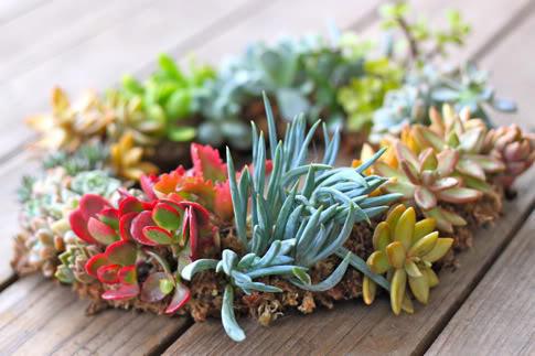 多肉植物地照片,有哪些颜值高的多肉植物?