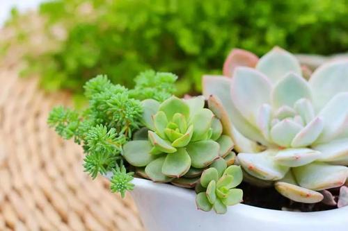 卧室可以摆放哪些花卉植物?(卧室适合摆放哪些花卉?)